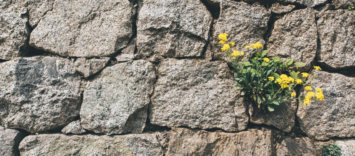 stone wall structure with yellow flowers